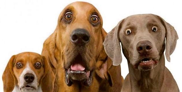 Scared Condo Dogs