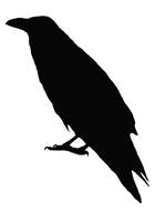 Raven Kim Middleton