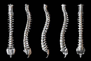 views of spine