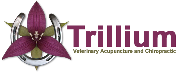 Trillium Veterinary Acupuncture and Chiropractic