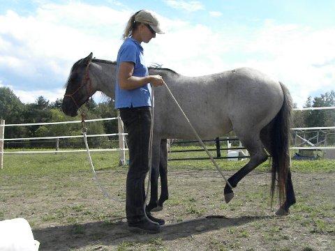 Training problem horses