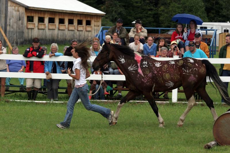 Equine Fest