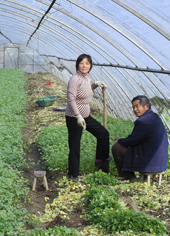 China family invested in a greenhouse after receiving secure rights to land