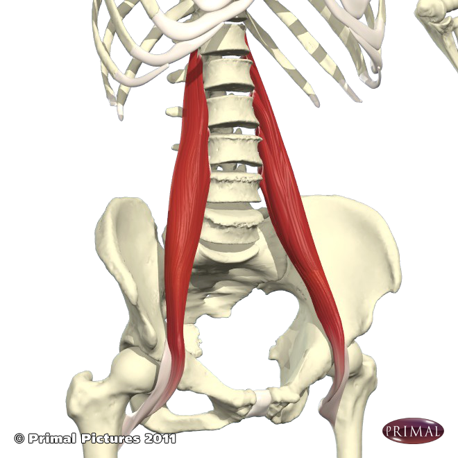 tight hip flexors and quads
