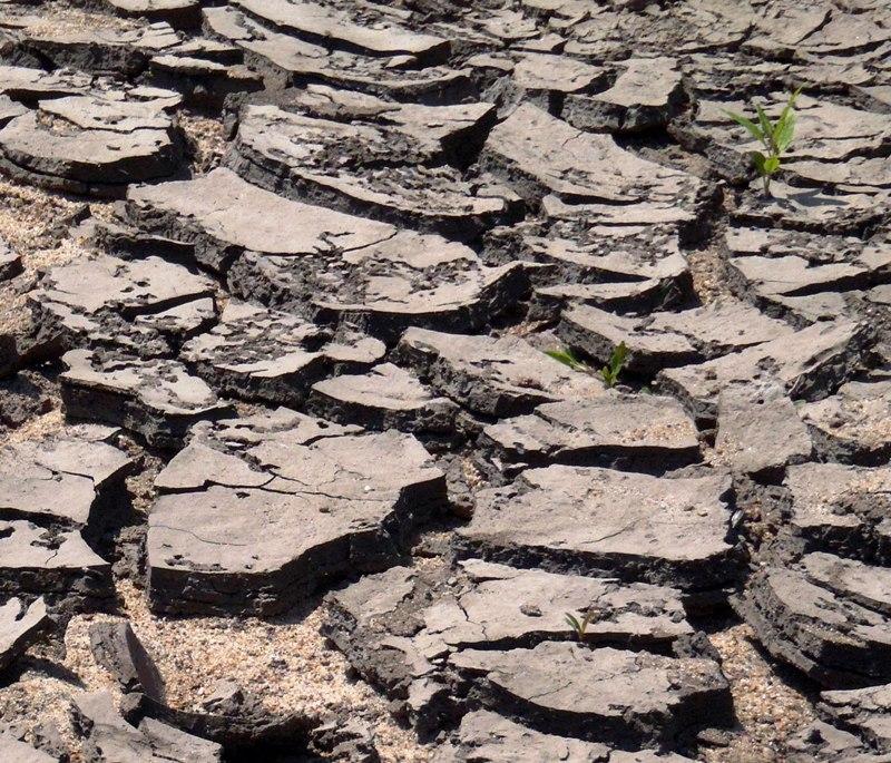 Dried Mud Wapsi Stark