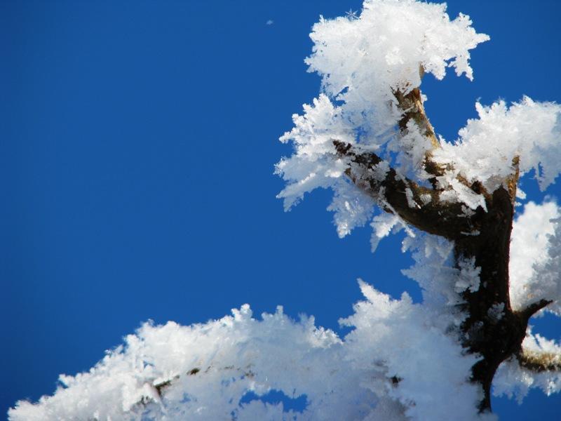 Frosty Locust GStark