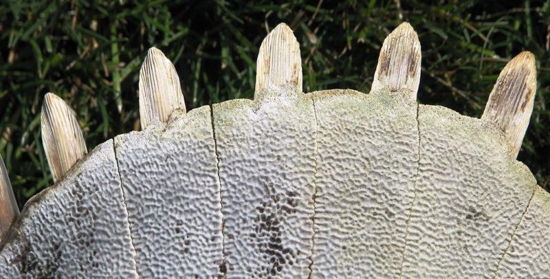 Softshell Turtle Shell Tight Crop G.Stark
