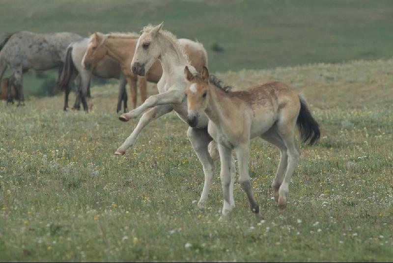 Cloud foals