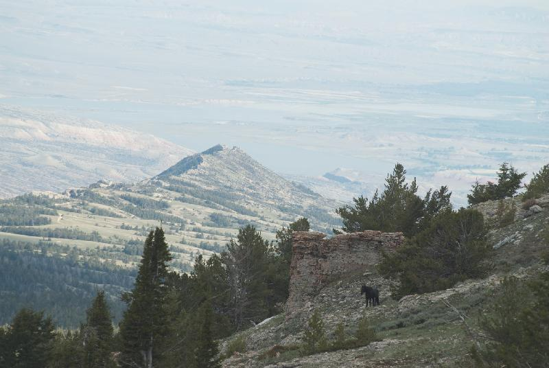 Pryor Mountains - Sykes Ridge