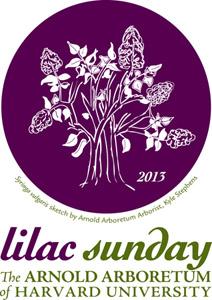 Lilac Sunday 2013