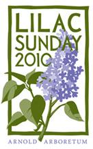 Lilac_Sunday_2010