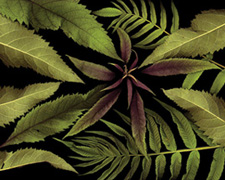 Roadside Foliage by Marty Klein