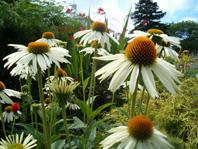 native_plants