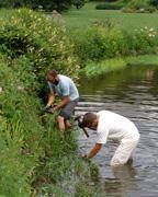 Dawson Pond planting