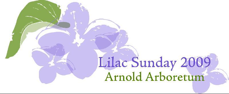Lilac Sunday T-shirt