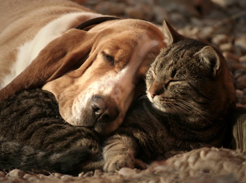 cat_pillow_dog_blanket.jpg