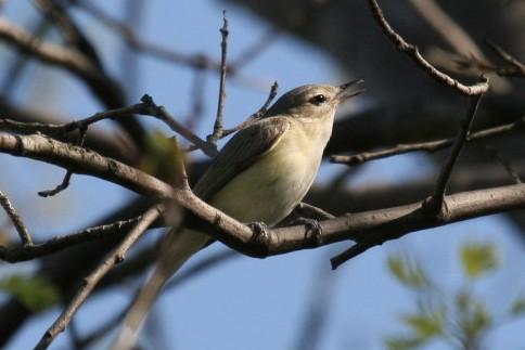 Bird SEth