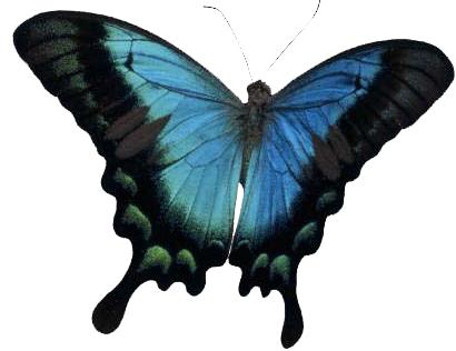 marposa