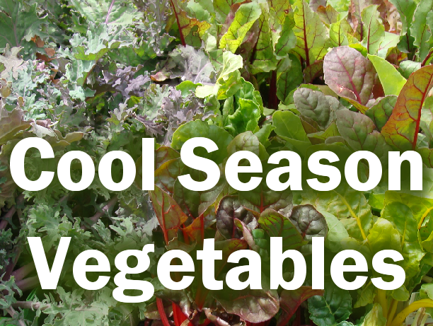 Cool Season Vegetable photo and text graphic