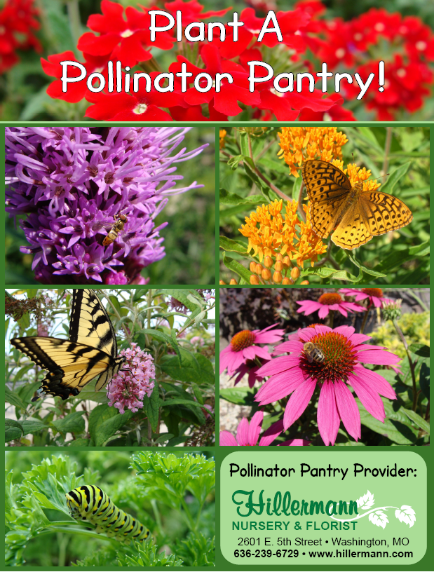 Plant a pantry for pollinators! Flower and plant pictures with text. Pollinator Pantry Provider - Hillermann Nursery and Florist, www.hillermann.com