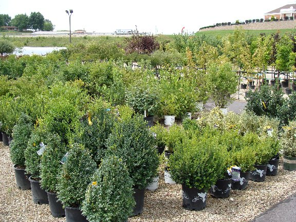 Trees and shrubs available at Hillermann Nursery and Florist