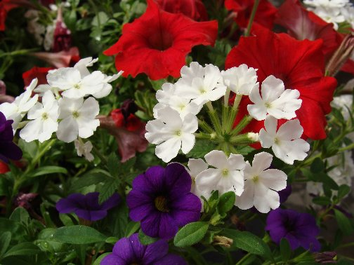 Annual flowers in a container garden at Hillermann Nursery and Florist