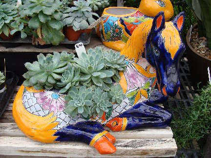 Succulent plants in a colorful horse container