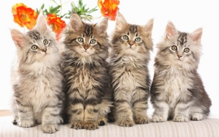 Picture of four kittens with flowers behind them
