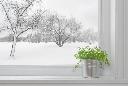 Houseplant on a windowsill with a winter scene outside the window