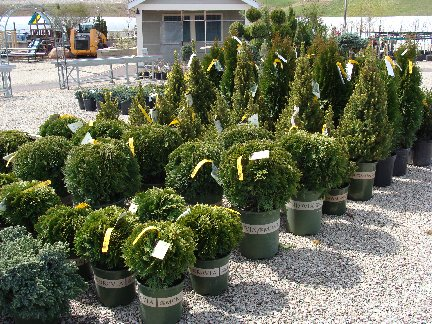Nursery plants available at Hillermann Nursery and Florist