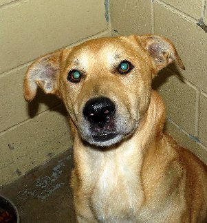 Adoptable dog Connor from Franklin County Humane Society