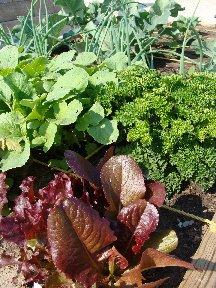 Cool Season Garden Vegetables