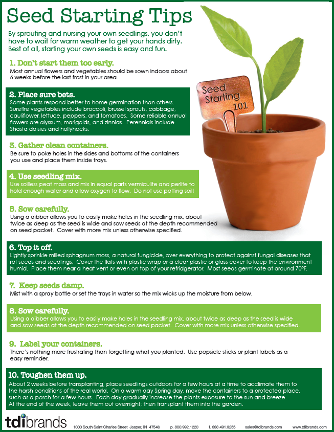 Seed starting tips graphic