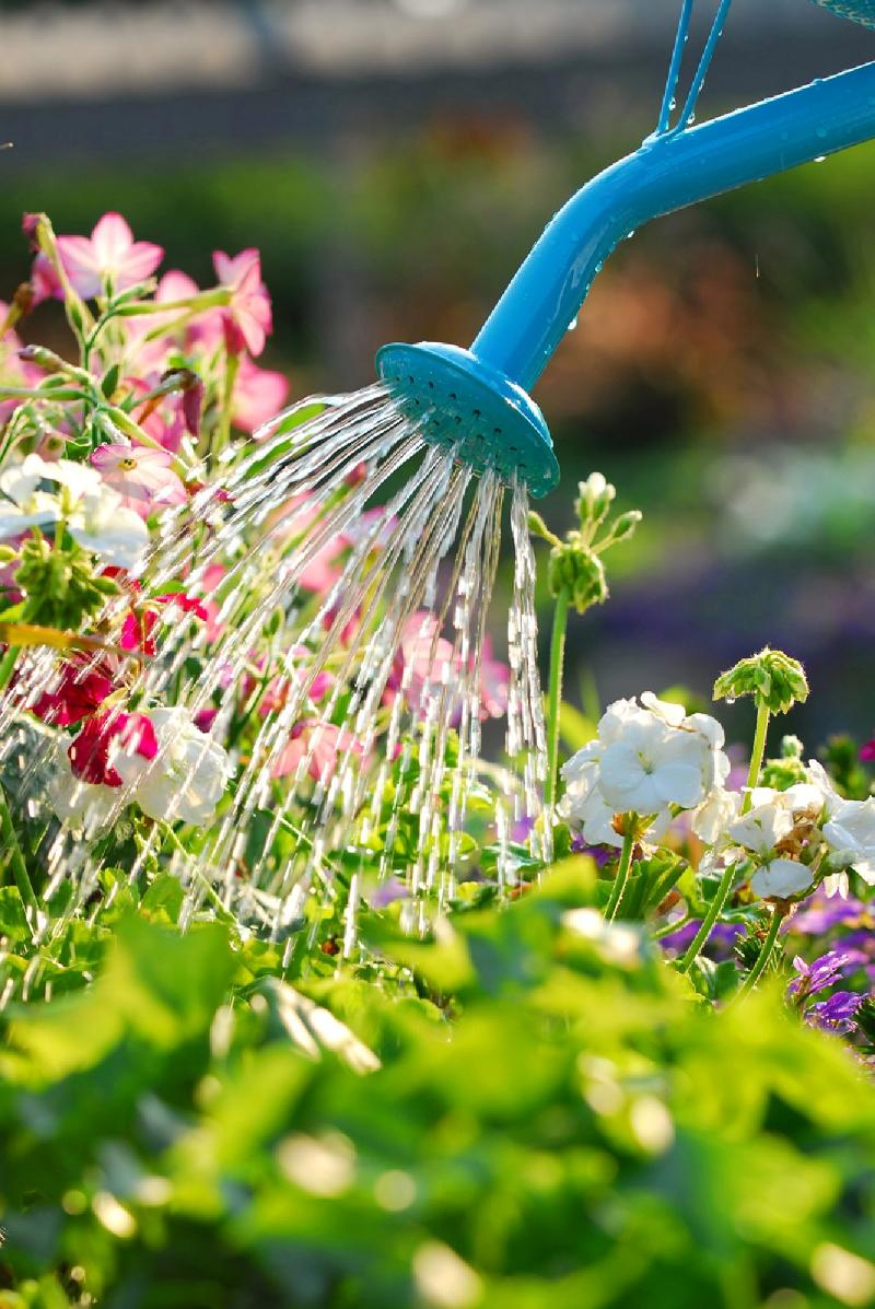 Flowers being watered with watering can