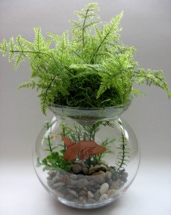 A small fish bowl with a plant