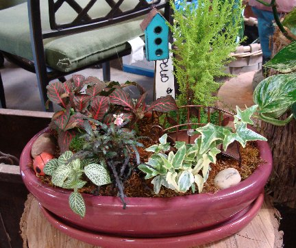 Mini Garden available at Hillermann Nursery and Florist