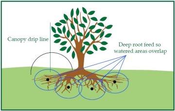 Deep Root Feeding Graphic