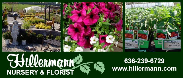 Pictures, logo and store information in a heading graphic for Hillermann Nursery and Florist