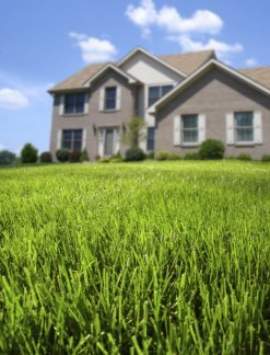 A nice lawn with a house in the background