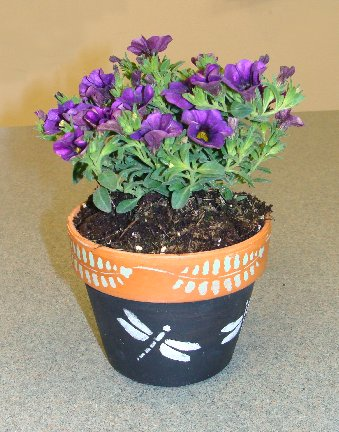 Planted chalk paint flower pot from Hillermann Nursery and Florist