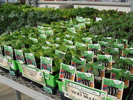 Vegetable plants available at Hillermann Nursery and Florist