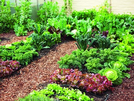 Vegetable garden picture