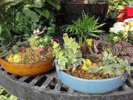 Mini garden planters available at Hillermann Nursery & Florist