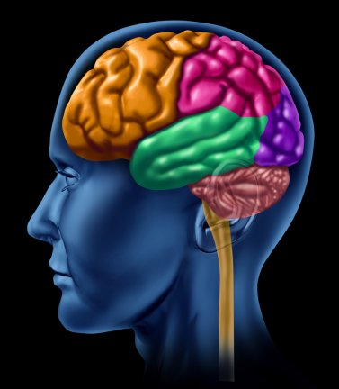 Colorful clipart of a human head and brain