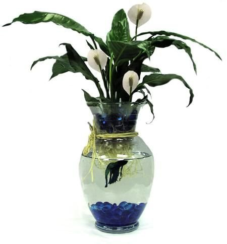 Betta Fish bowl with a live fish and plant
