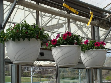 Hanging baskets available at Hillermann Nursery and Florist