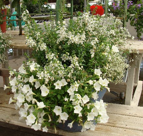 Container flower garden available at Hillermann Nursery and Florist!