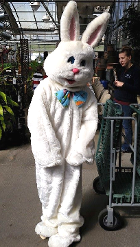 The Easter Bunny's arrival at Hillermann Nursery and Florist