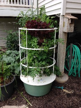 Sandi's Tower Garden with vegetable and herb plants growing