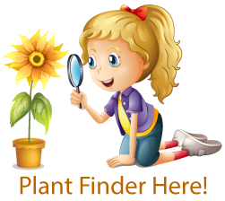 Girl with a plant - graphic for the plant finder on Hillermann's website.